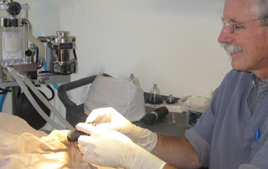 Surgery and Dental Treatments